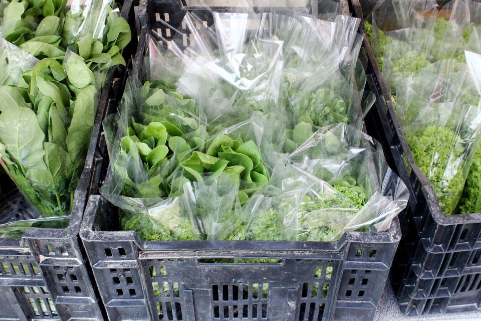 お店で使っているほとんどの野菜は実家が営む農園「かなでファーム」で栽培した無農薬野菜